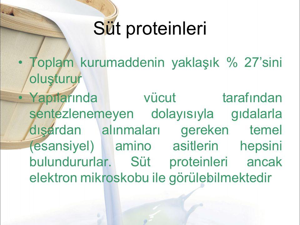 Süt proteinleri Toplam kurumaddenin yaklaşık % 27'sini oluşturur Yapılarında vücut tarafından sentezlenemeyen dolayısıyla gıdalarla dışardan alınmaları gereken temel (esansiyel) amino asitlerin hepsini bulundururlar.
