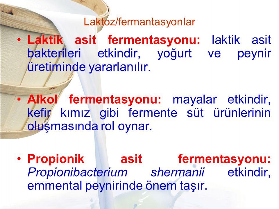 Laktoz/fermantasyonlar Laktik asit fermentasyonu: laktik asit bakterileri etkindir, yoğurt ve peynir üretiminde yararlanılır.