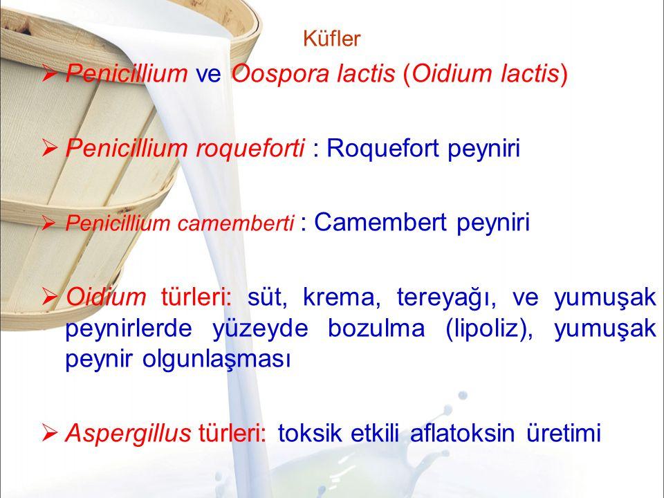 Küfler  Penicillium ve Oospora lactis (Oidium lactis)  Penicillium roqueforti : Roquefort peyniri  Penicillium camemberti : Camembert peyniri  Oidium türleri: süt, krema, tereyağı, ve yumuşak peynirlerde yüzeyde bozulma (lipoliz), yumuşak peynir olgunlaşması  Aspergillus türleri: toksik etkili aflatoksin üretimi