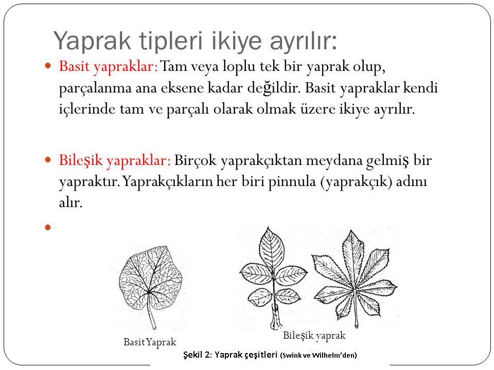 Yaprak tipleri ikiye ayrılır: Basit yapraklar: Tam veya loplu tek bir yaprak olup, parçalanma ana eksene kadar de ğ ildir. Basit yapraklar kendi içler