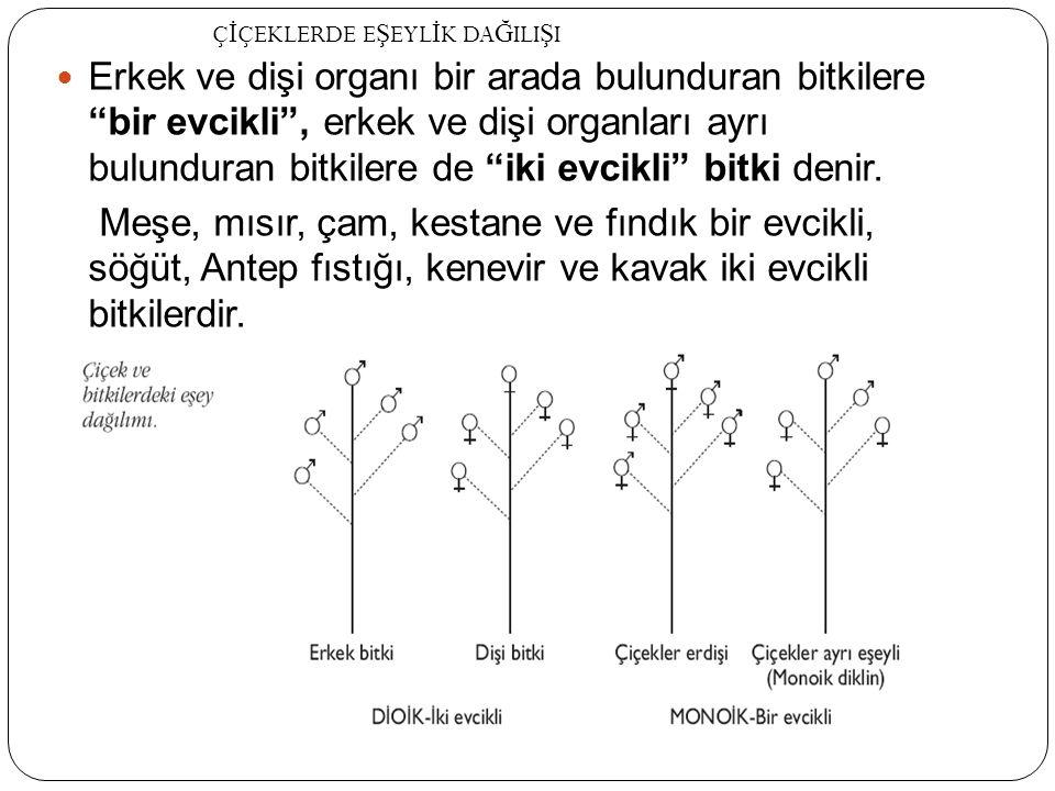 """Erkek ve dişi organı bir arada bulunduran bitkilere """"bir evcikli"""", erkek ve dişi organları ayrı bulunduran bitkilere de """"iki evcikli"""" bitki denir. Meş"""