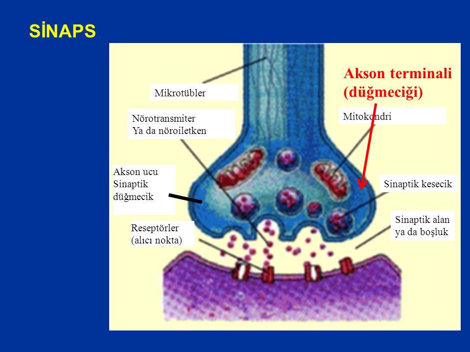 SİNAPS Sinaptik kesecik Sinaptik alan ya da boşluk Nörotransmiter Ya da nöroiletken Mitokondri Mikrotübler Reseptörler (alıcı nokta) Akson ucu Sinaptik düğmecik Akson terminali (düğmeciği)
