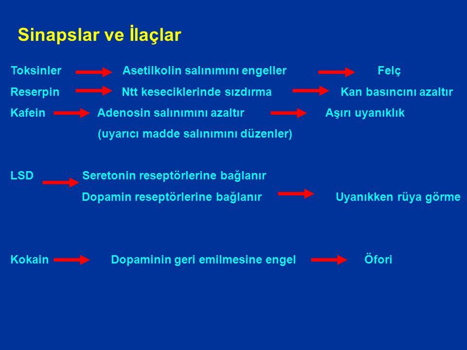 Toksinler Asetilkolin salınımını engeller Felç Reserpin Ntt keseciklerinde sızdırma Kan basıncını azaltır Kafein Adenosin salınımını azaltır Aşırı uyanıklık (uyarıcı madde salınımını düzenler) LSD Seretonin reseptörlerine bağlanır Dopamin reseptörlerine bağlanır Uyanıkken rüya görme Kokain Dopaminin geri emilmesine engel Öfori Sinapslar ve İlaçlar