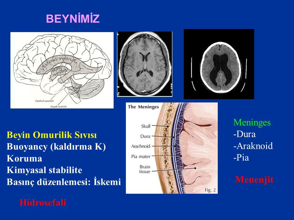 BEYNİMİZ Meninges -Dura -Araknoid -Pia Hidrosefali Menenjit Beyin Omurilik Sıvısı Buoyancy (kaldırma K) Koruma Kimyasal stabilite Basınç düzenlemesi: İskemi