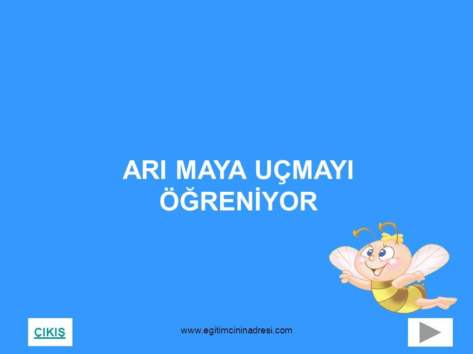 ARI MAYA UÇMAYI ÖĞRENİYOR ÇIKIŞ www.egitimcininadresi.com