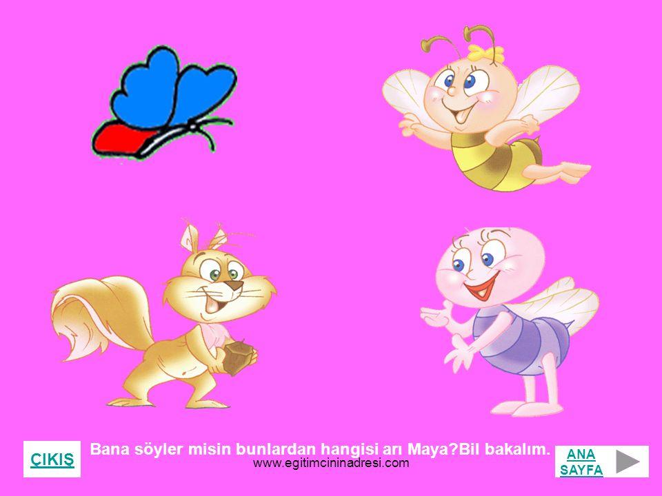 Bana söyler misin bunlardan hangisi arı Maya Bil bakalım. ÇIKIŞ ANA SAYFA www.egitimcininadresi.com