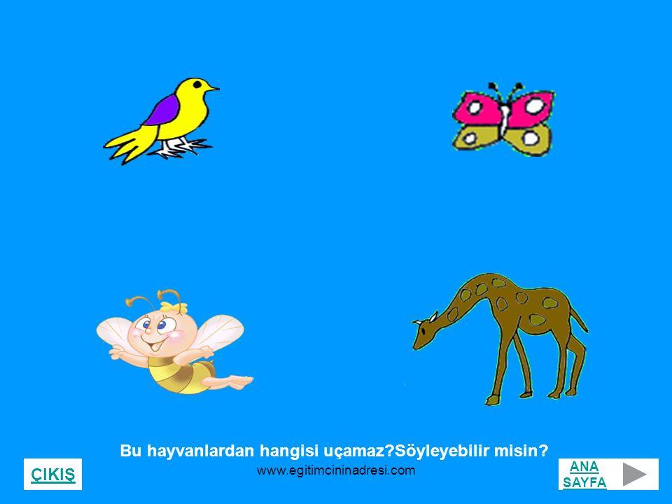 Bu hayvanlardan hangisi uçamaz?Söyleyebilir misin? ANA SAYFA ÇIKIŞ www.egitimcininadresi.com