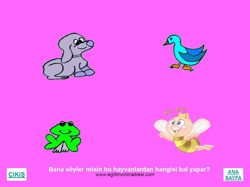 Bana söyler misin bu hayvanlardan hangisi bal yapar? ÇIKIŞ ANA SAYFA www.egitimcininadresi.com