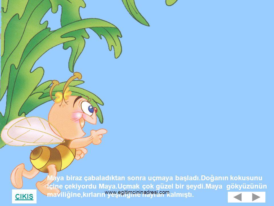 ÇIKIŞ Maya biraz çabaladıktan sonra uçmaya başladı.Doğanın kokusunu içine çekiyordu Maya.Uçmak çok güzel bir şeydi.Maya gökyüzünün maviliğine,kırların yeşilliğine hayran kalmıştı.
