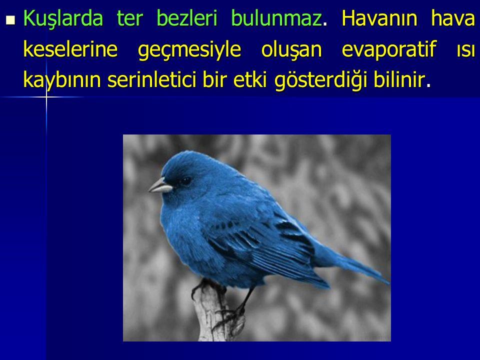 Kuşlarda ter bezleri bulunmaz.