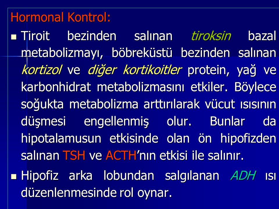 Hormonal Kontrol: Tiroit bezinden salınan tiroksin bazal metabolizmayı, böbreküstü bezinden salınan kortizol ve diğer kortikoitler protein, yağ ve karbonhidrat metabolizmasını etkiler.