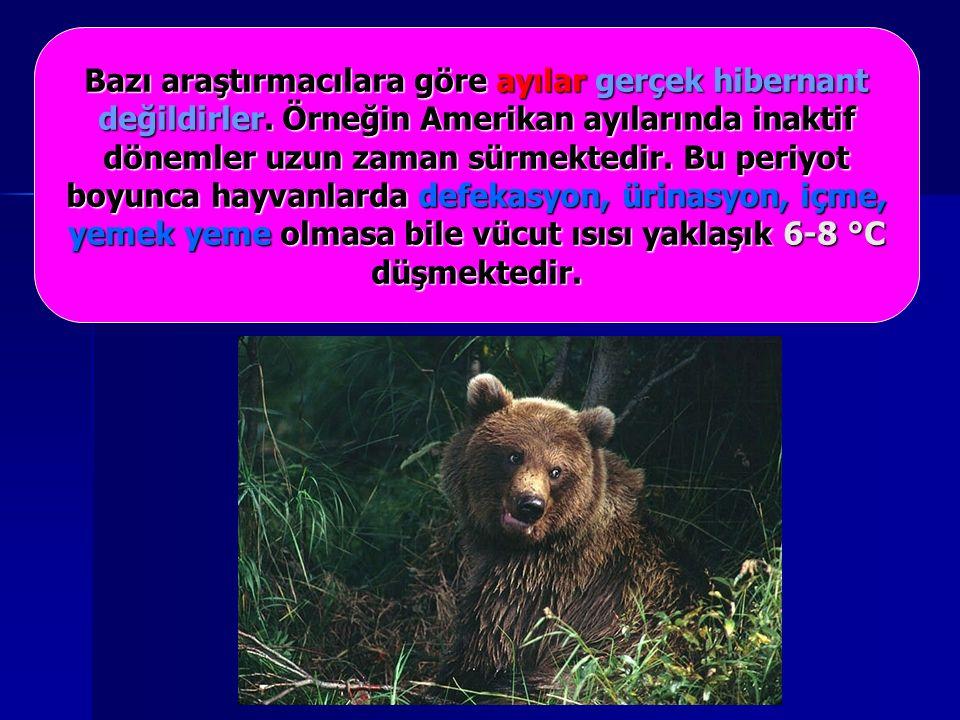 Bazı araştırmacılara göre ayılar gerçek hibernant değildirler.