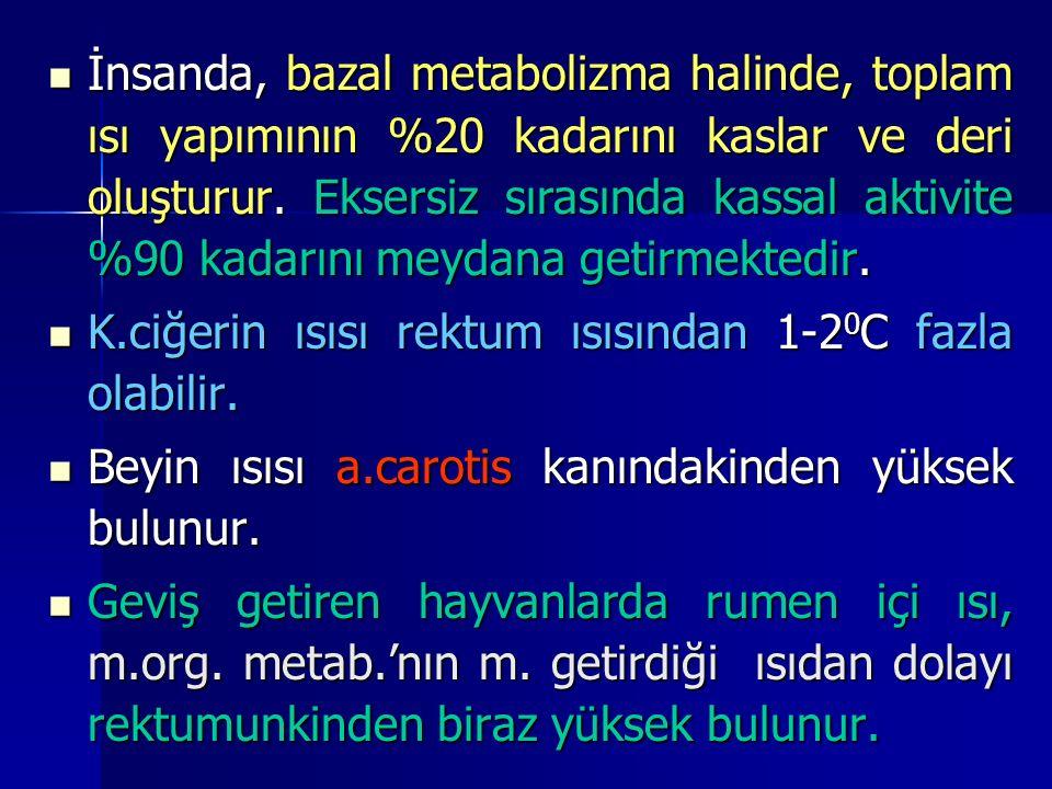 İnsanda, bazal metabolizma halinde, toplam ısı yapımının %20 kadarını kaslar ve deri oluşturur.