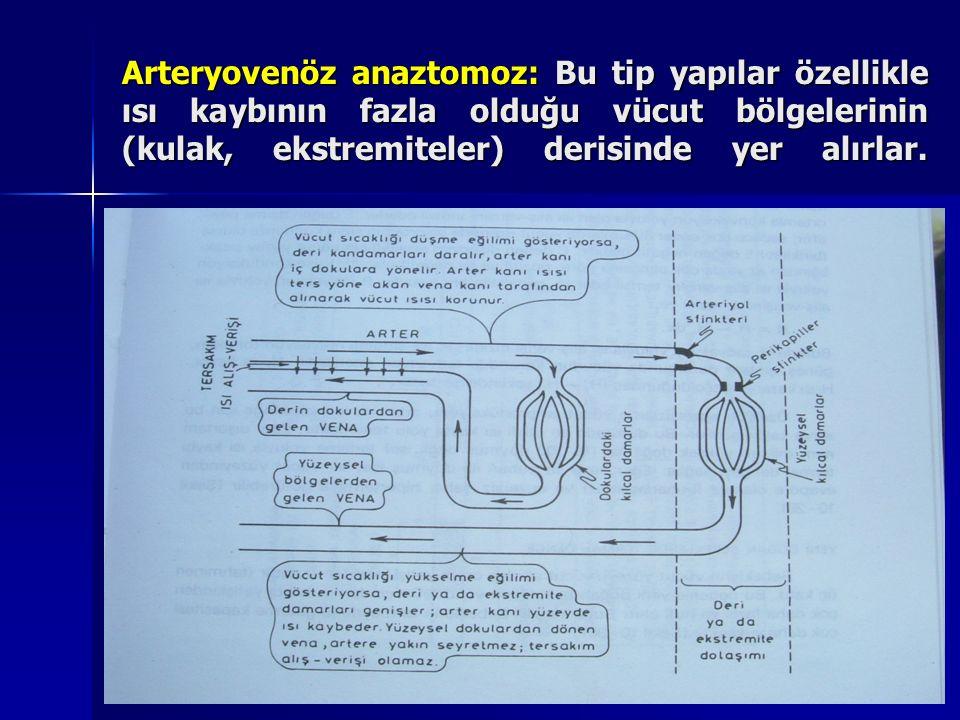 Arteryovenöz anaztomoz: Bu tip yapılar özellikle ısı kaybının fazla olduğu vücut bölgelerinin (kulak, ekstremiteler) derisinde yer alırlar.