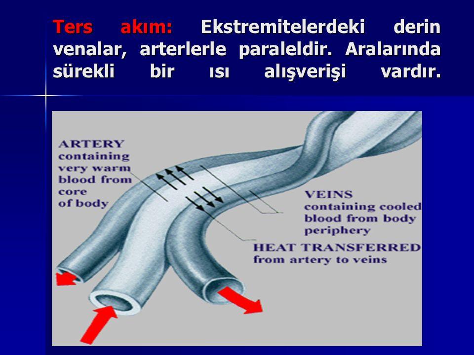 Ters akım: Ekstremitelerdeki derin venalar, arterlerle paraleldir.