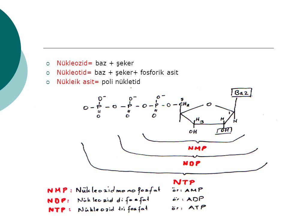 10  Nükleozid= baz + şeker  Nükleotid= baz + şeker+ fosforik asit  Nükleik asit= poli nükletid