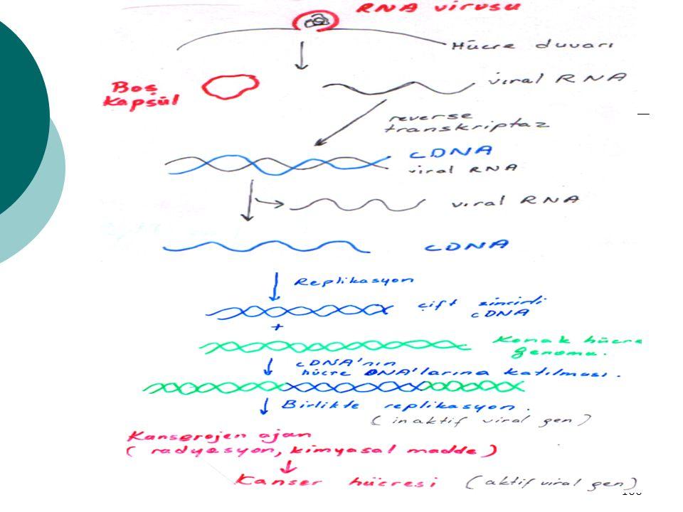 101 Hormon Üretimi  Reverse transkriptaz sentetik gen sentezi E.coli'ye verilir Plazmid oluşturma (cDNA) Hızla çoğalır Translasyon Sonuçta istenen protein,Ör:İNSULİN