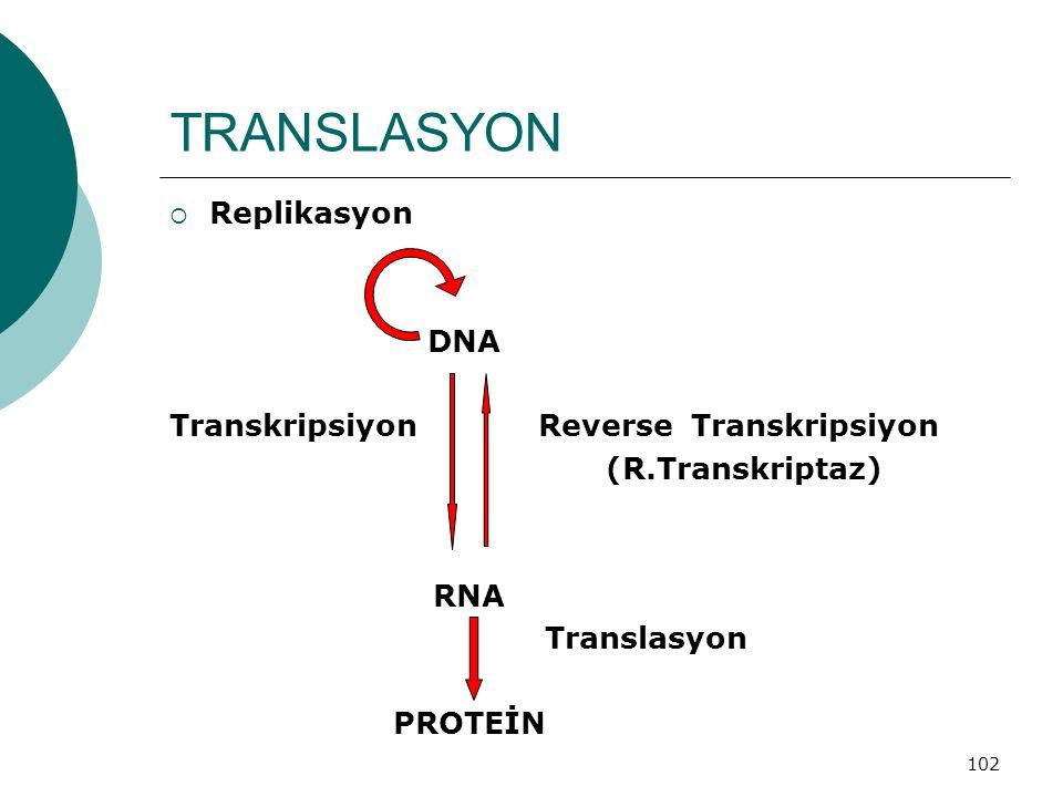 102 TRANSLASYON  Replikasyon DNA Transkripsiyon Reverse Transkripsiyon (R.Transkriptaz) RNA Translasyon PROTEİN