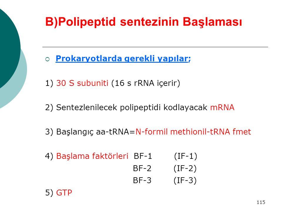 115 B)Polipeptid sentezinin Başlaması  Prokaryotlarda gerekli yapılar; 1) 30 S subuniti (16 s rRNA içerir) 2) Sentezlenilecek polipeptidi kodlayacak