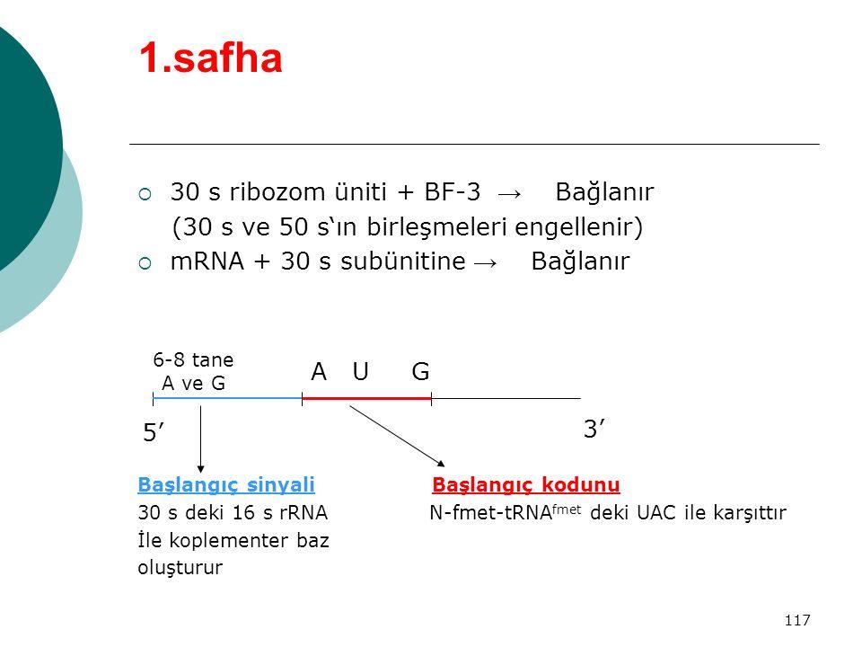 117 1.safha  30 s ribozom üniti + BF-3 → Bağlanır (30 s ve 50 s'ın birleşmeleri engellenir)  mRNA + 30 s subünitine → Bağlanır Başlangıç sinyali Baş