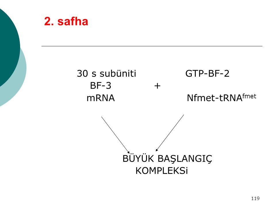 119 2. safha 30 s subüniti GTP-BF-2 BF-3 + mRNA Nfmet-tRNA fmet BÜYÜK BAŞLANGIÇ KOMPLEKSi
