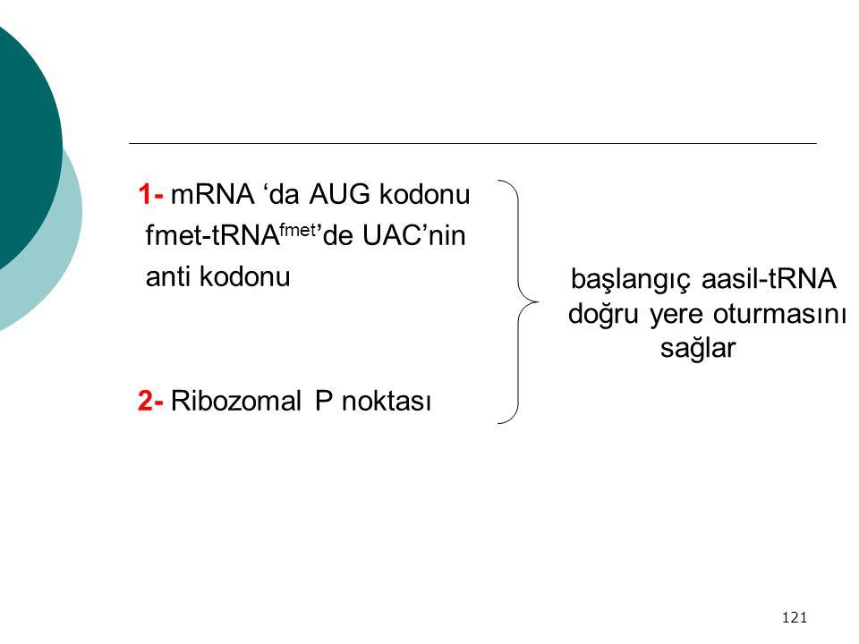 121 1- mRNA 'da AUG kodonu fmet-tRNA fmet 'de UAC'nin anti kodonu 2- Ribozomal P noktası başlangıç aasil-tRNA doğru yere oturmasını sağlar