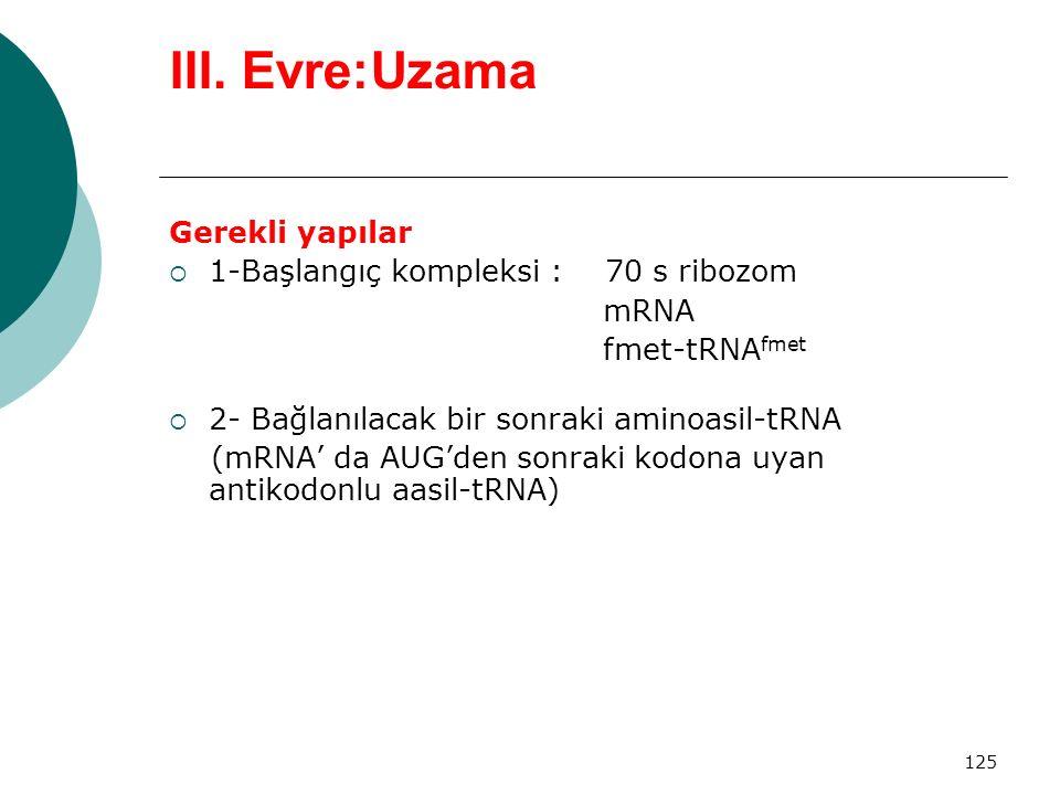 125 III. Evre:Uzama Gerekli yapılar  1-Başlangıç kompleksi : 70 s ribozom mRNA fmet-tRNA fmet  2- Bağlanılacak bir sonraki aminoasil-tRNA (mRNA' da