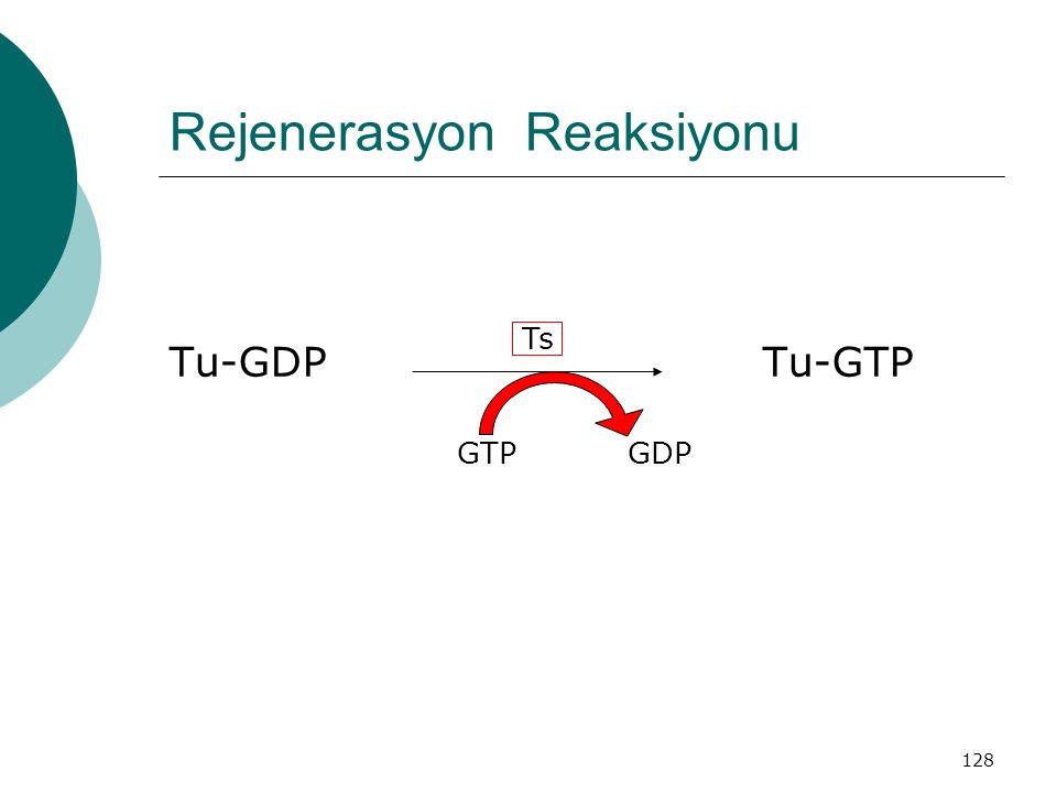 128 Rejenerasyon Reaksiyonu Tu-GDP Tu-GTP GTP GDP Ts