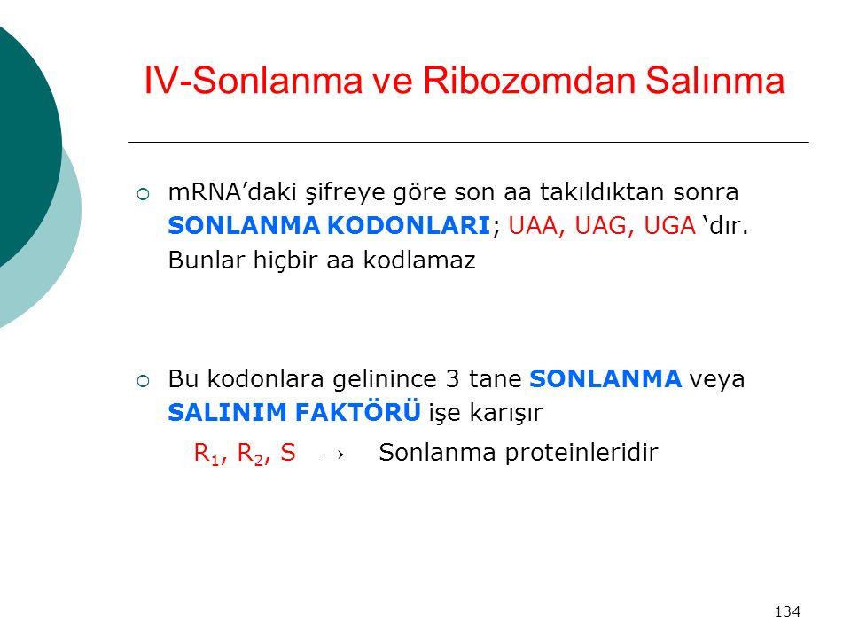 134 IV-Sonlanma ve Ribozomdan Salınma  mRNA'daki şifreye göre son aa takıldıktan sonra SONLANMA KODONLARI; UAA, UAG, UGA 'dır. Bunlar hiçbir aa kodla