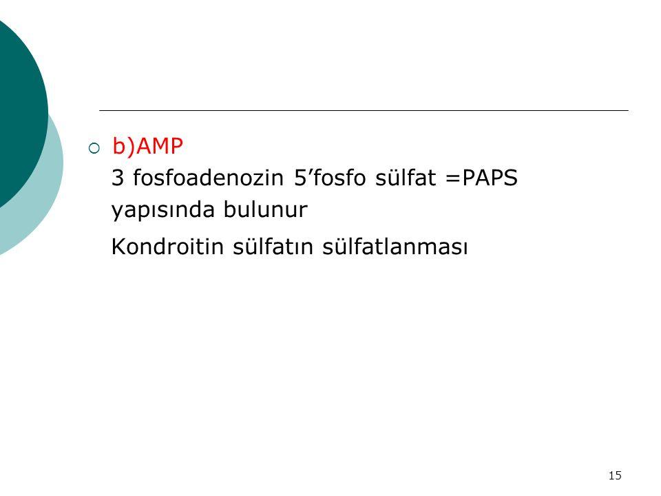 15  b)AMP 3 fosfoadenozin 5'fosfo sülfat =PAPS yapısında bulunur Kondroitin sülfatın sülfatlanması