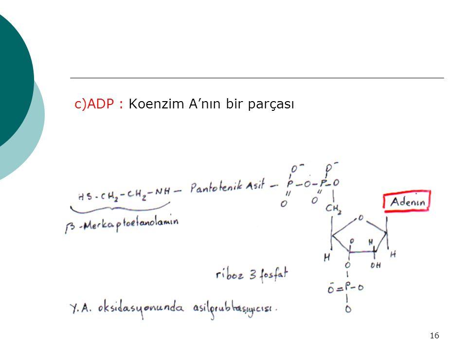 16 c)ADP : Koenzim A'nın bir parçası