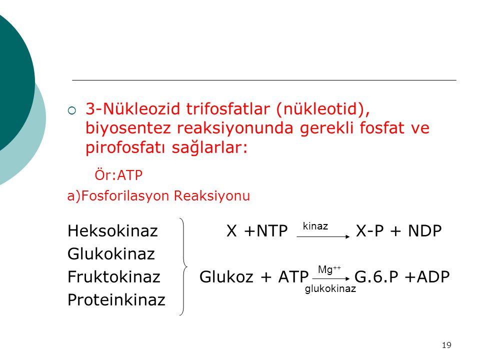 19  3-Nükleozid trifosfatlar (nükleotid), biyosentez reaksiyonunda gerekli fosfat ve pirofosfatı sağlarlar: Ör:ATP a)Fosforilasyon Reaksiyonu Heksoki