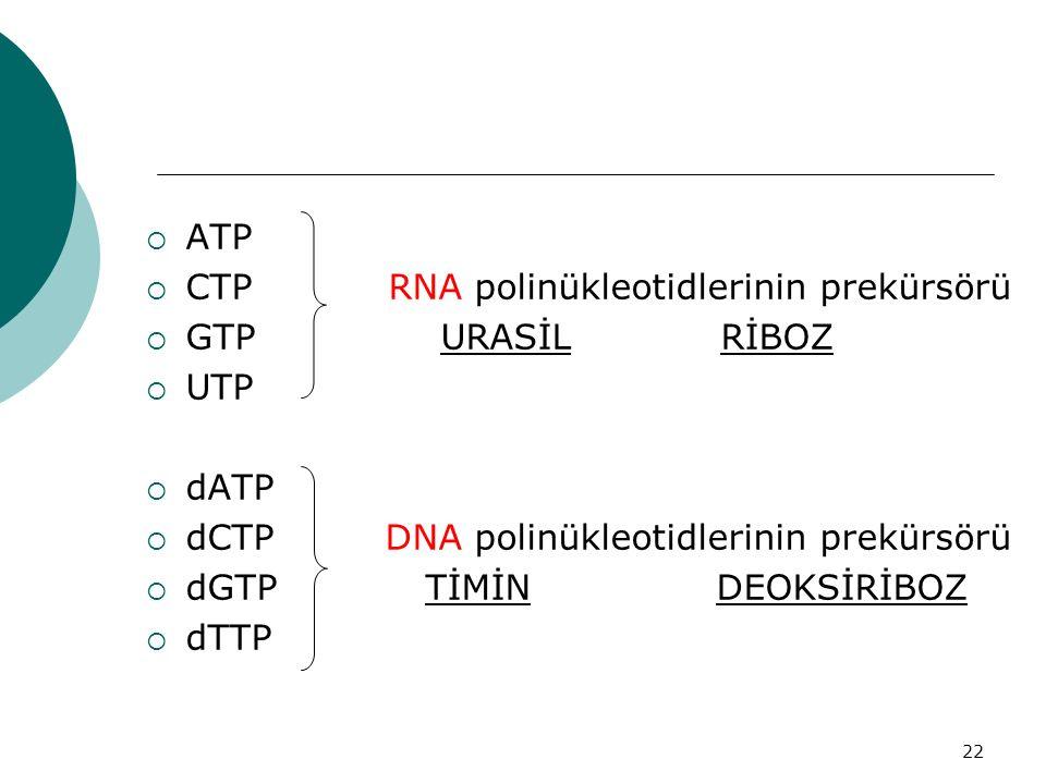 22  ATP  CTP RNA polinükleotidlerinin prekürsörü  GTP URASİL RİBOZ  UTP  dATP  dCTP DNA polinükleotidlerinin prekürsörü  dGTP TİMİN DEOKSİRİBOZ