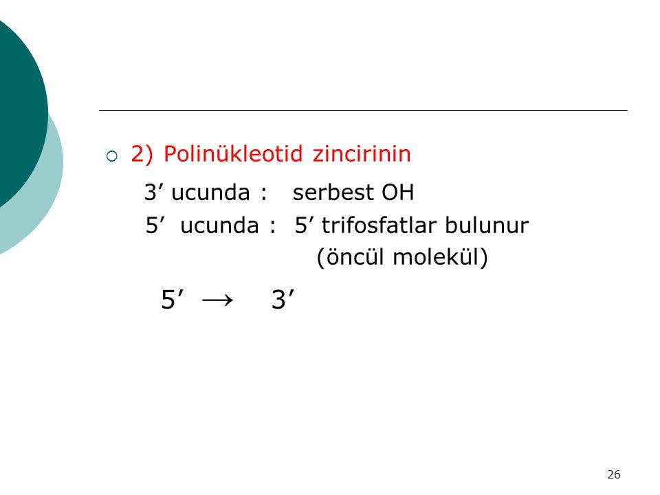26  2) Polinükleotid zincirinin 3' ucunda : serbest OH 5' ucunda : 5' trifosfatlar bulunur (öncül molekül) 5' → 3'