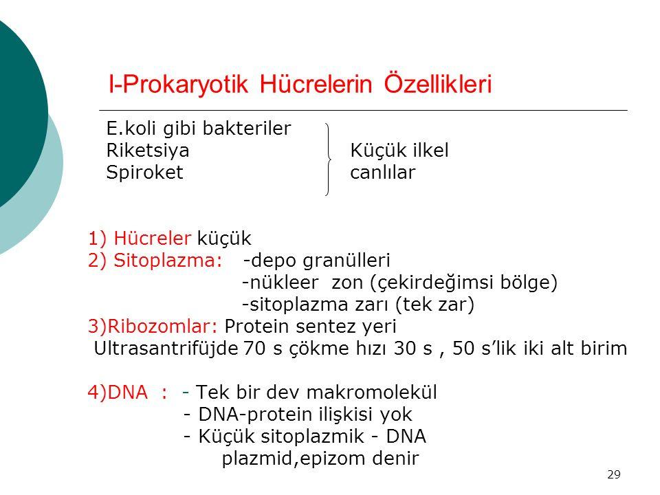 29 I-Prokaryotik Hücrelerin Özellikleri E.koli gibi bakteriler Riketsiya Küçük ilkel Spiroket canlılar 1) Hücreler küçük 2) Sitoplazma: -depo granülle