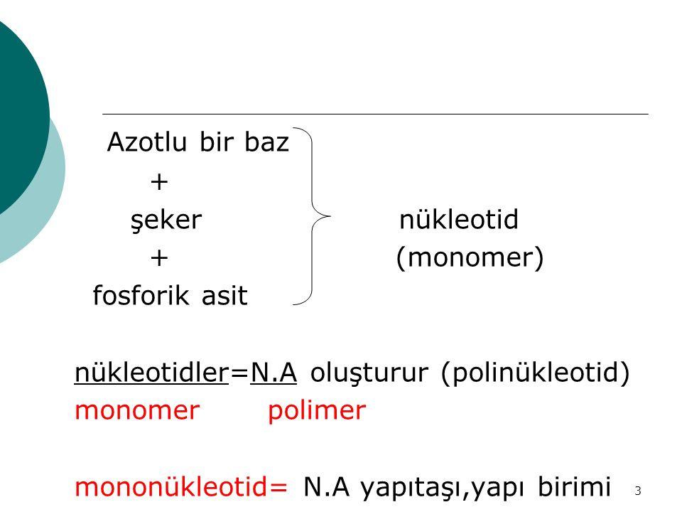 3 Azotlu bir baz + şeker nükleotid + (monomer) fosforik asit nükleotidler=N.A oluşturur (polinükleotid) monomer polimer mononükleotid= N.A yapıtaşı,ya