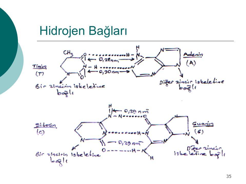35 Hidrojen Bağları
