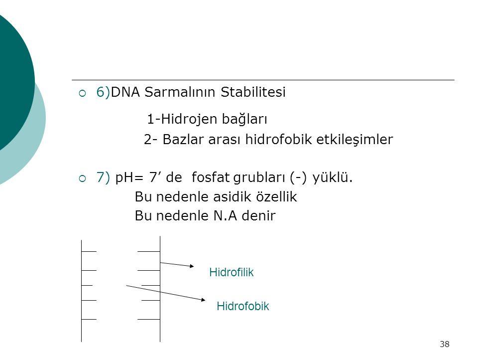 38  6)DNA Sarmalının Stabilitesi 1-Hidrojen bağları 2- Bazlar arası hidrofobik etkileşimler  7) pH= 7' de fosfat grubları (-) yüklü. Bu nedenle asid