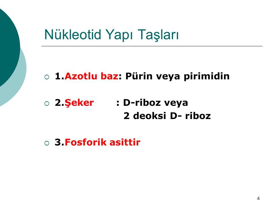 4 Nükleotid Yapı Taşları  1.Azotlu baz: Pürin veya pirimidin  2.Şeker : D-riboz veya 2 deoksi D- riboz  3.Fosforik asittir