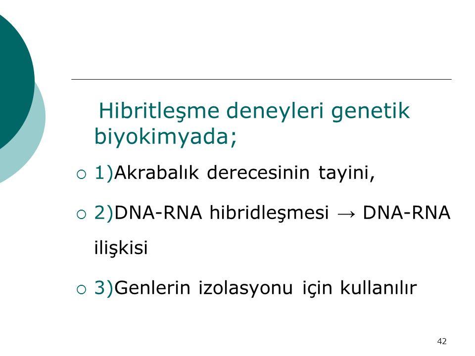 42 Hibritleşme deneyleri genetik biyokimyada;  1)Akrabalık derecesinin tayini,  2)DNA-RNA hibridleşmesi → DNA-RNA ilişkisi  3)Genlerin izolasyonu i
