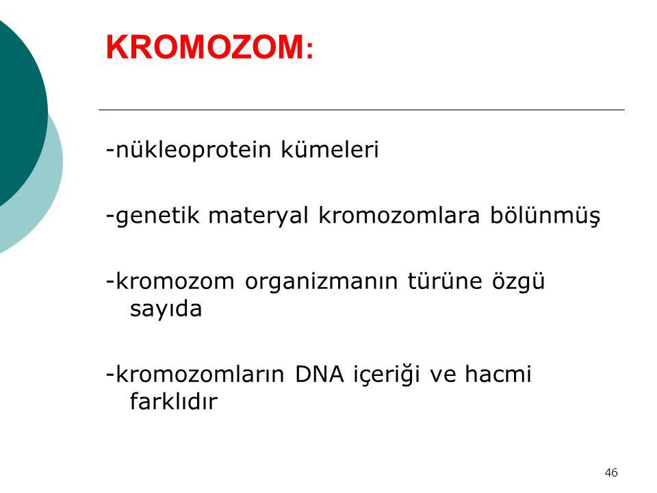 46 KROMOZOM : -nükleoprotein kümeleri -genetik materyal kromozomlara bölünmüş -kromozom organizmanın türüne özgü sayıda -kromozomların DNA içeriği ve