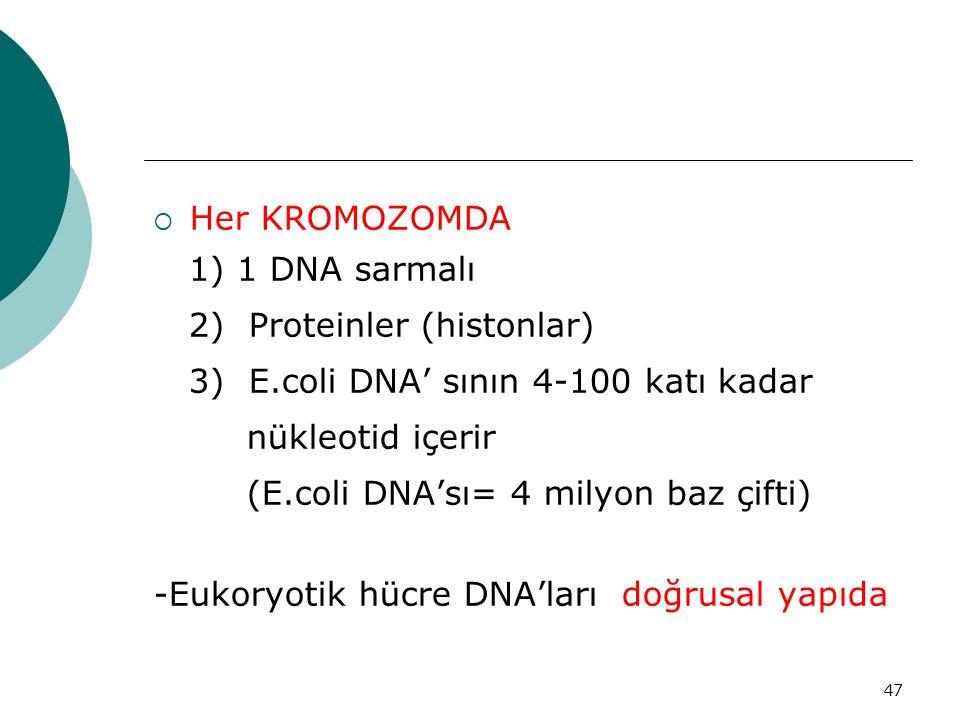 47  Her KROMOZOMDA 1) 1 DNA sarmalı 2) Proteinler (histonlar) 3) E.coli DNA' sının 4-100 katı kadar nükleotid içerir (E.coli DNA'sı= 4 milyon baz çif