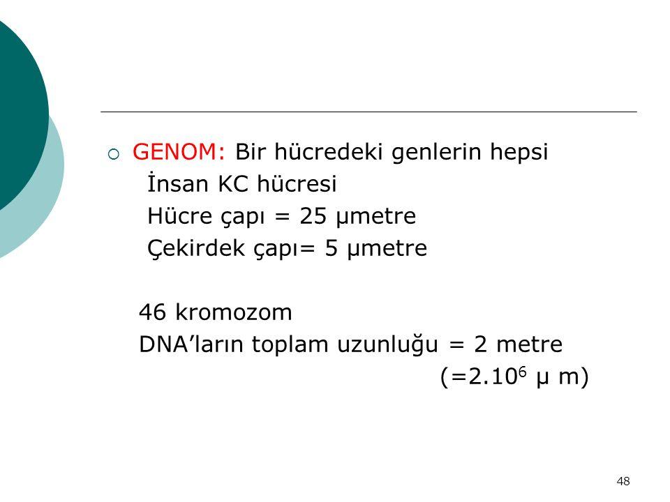 48  GENOM: Bir hücredeki genlerin hepsi İnsan KC hücresi Hücre çapı = 25 μmetre Çekirdek çapı= 5 μmetre 46 kromozom DNA'ların toplam uzunluğu = 2 met