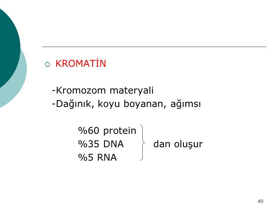 49  KROMATİN -Kromozom materyali -Dağınık, koyu boyanan, ağımsı %60 protein %35 DNA dan oluşur %5 RNA