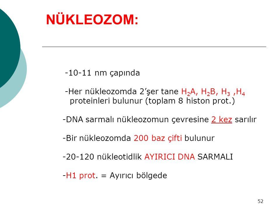 52 NÜKLEOZOM: -10-11 nm çapında -Her nükleozomda 2'şer tane H 2 A, H 2 B, H 3,H 4 proteinleri bulunur (toplam 8 histon prot.) -DNA sarmalı nükleozomun
