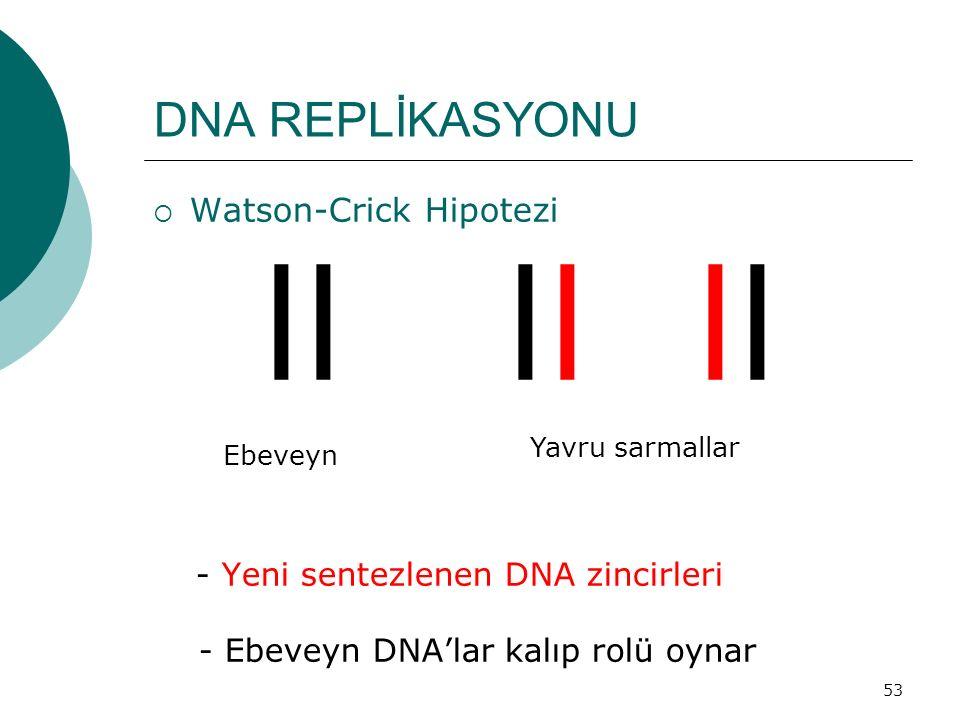 53 DNA REPLİKASYONU  Watson-Crick Hipotezi ll ll ll - Yeni sentezlenen DNA zincirleri - Ebeveyn DNA'lar kalıp rolü oynar Ebeveyn Yavru sarmallar