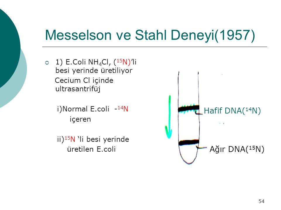 54 Messelson ve Stahl Deneyi(1957)  1) E.Coli NH 4 Cl, ( 15 N)'li besi yerinde üretiliyor Cecium Cl içinde ultrasantrifüj i)Normal E.coli - 14 N içer
