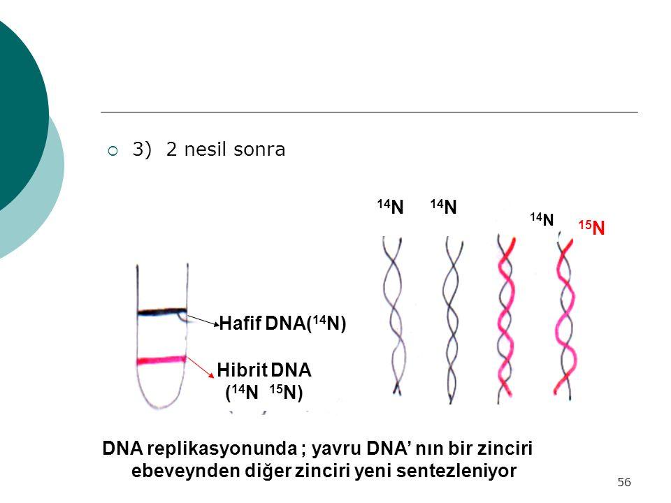 56  3) 2 nesil sonra 14 N 15 N Hafif DNA( 14 N) Hibrit DNA ( 14 N 15 N) DNA replikasyonunda ; yavru DNA' nın bir zinciri ebeveynden diğer zinciri yen