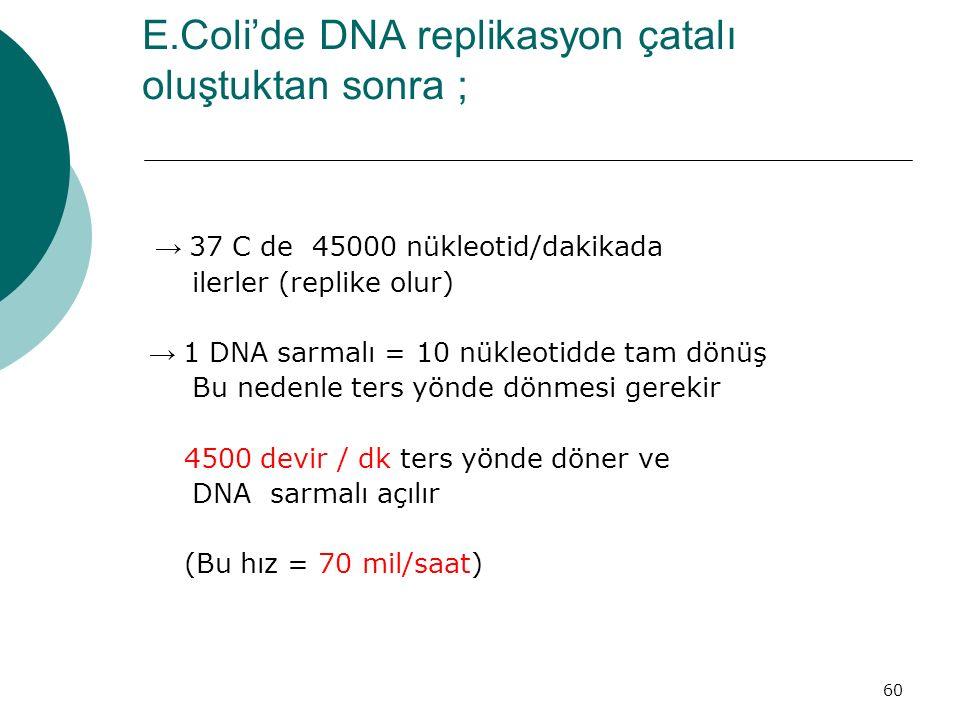60 E.Coli'de DNA replikasyon çatalı oluştuktan sonra ; → 37 C de 45000 nükleotid/dakikada ilerler (replike olur) → 1 DNA sarmalı = 10 nükleotidde tam
