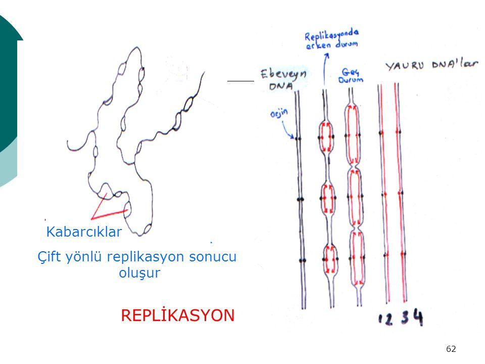 62 REPLİKASYON Çift yönlü replikasyon sonucu oluşur Kabarcıklar